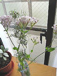 花屋でもらった花のプレゼント