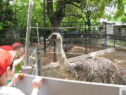 五月山動物園のエミュ