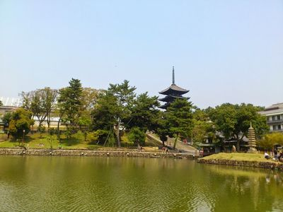 猿沢の池と興福寺の五重塔