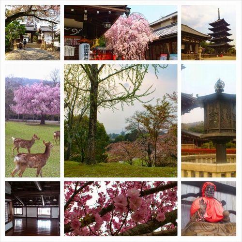 おとなの遠足 in 奈良