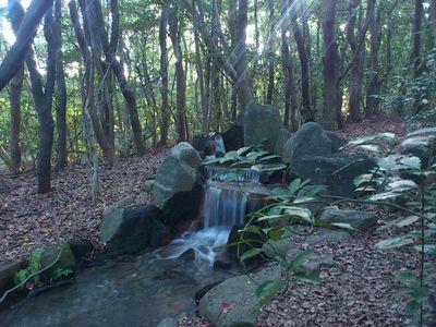 万博記念公園の散策路