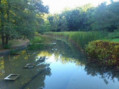 ビオトープの池@万博記念公園