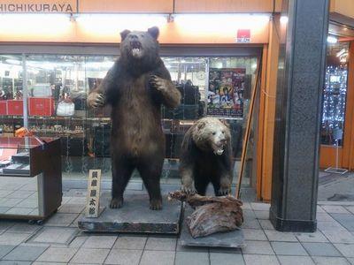 狸小路の熊