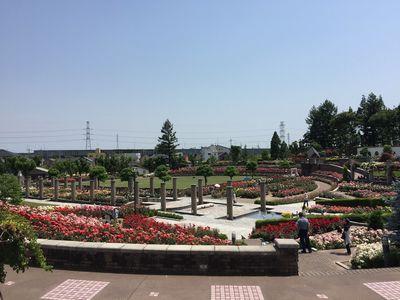 伊丹市立荒牧バラ公園